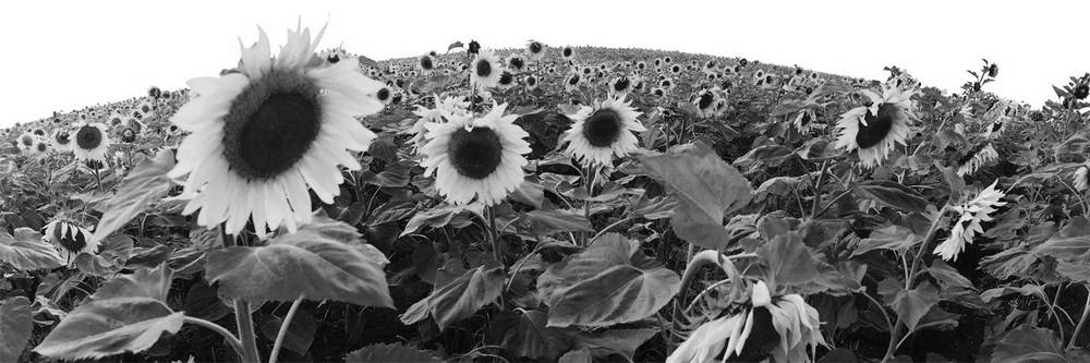 113 (Черно-белый)