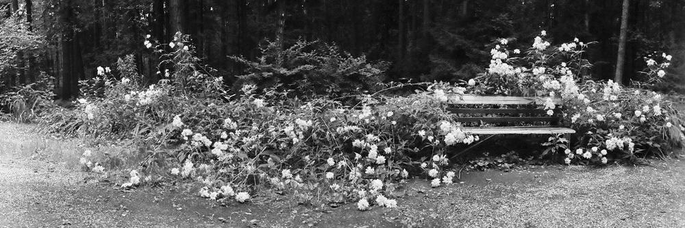 114 (Черно-белый)